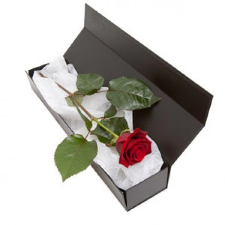 Single Rose in a Box